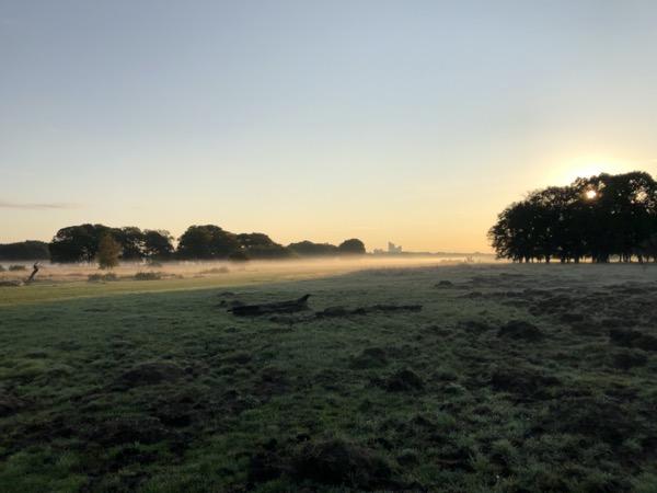 Morning mist on Wanstead Flats